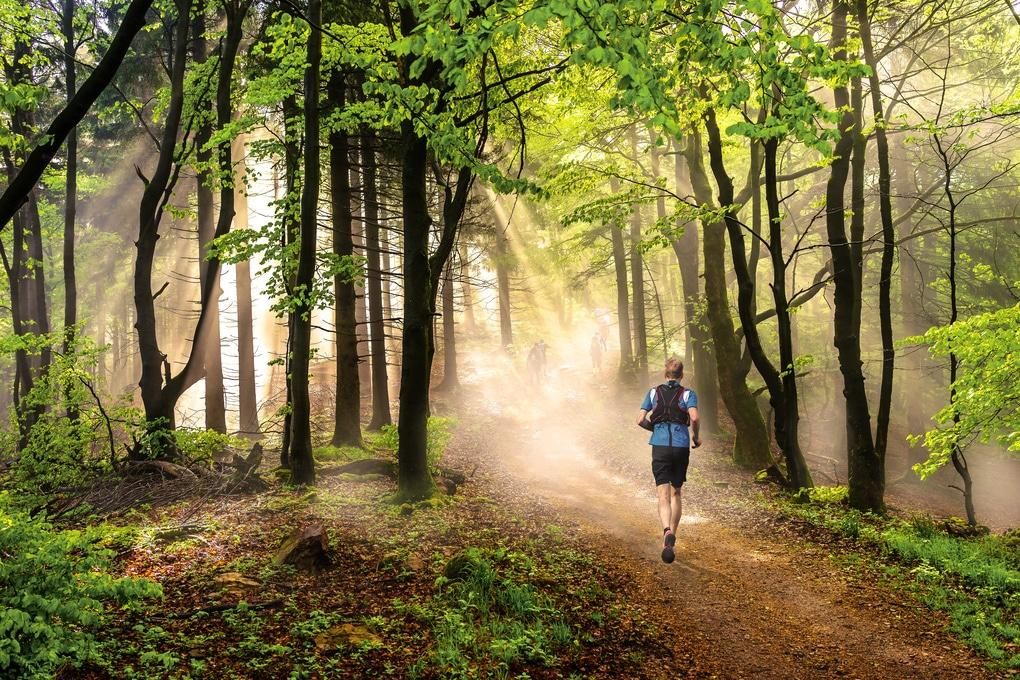 Auf dem Bild ist ein männlicher Jogger zu sehen, der bei leichtem Nebel und morgendlichen Sonnenstrahlen durch den Wald am Tegernsee läuft. Auf dem Weg vorhin erkennt man eine kleine Gruppe die am Wandern ist.